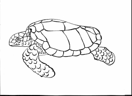 marvelous eastern box turtle coloring page with turtle coloring