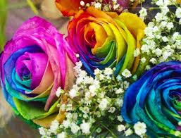 Multi Colored Roses The 21 Best Images About Multicolored Roses On Pinterest