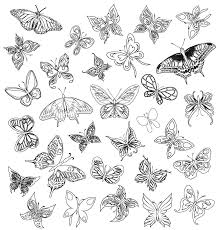 simple painted butterfly design vector material simple