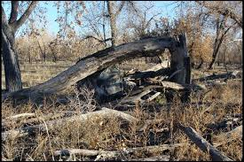 Natural Hunting Blinds Ground Hunting Technique For Whitetail