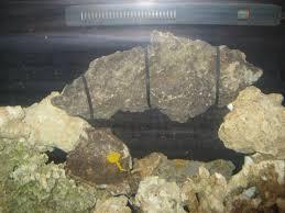 Aquascaping A Reef Tank How To Aquascape An Aquariumsandbaraquatics