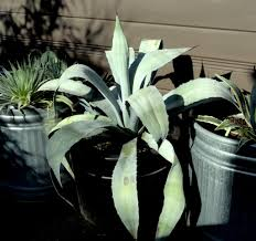 looking closer at the plants that have kept me engaged in the