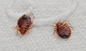 How To Get Rid Of Bed Bugs In Mattress Get Rid Of Bed Bugs And Avoid Bites With These Simple Steps