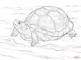cute eastern box turtle coloring page free printable coloring pages