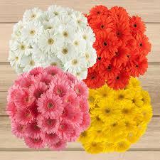 gerbera daisies 150 stem assorted gerbera daisies
