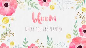free desktop wallpaper where you are planted