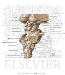 Brain Stem Anatomy Posterolateral View