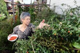 meet east vancouver u0027s original urban farmers