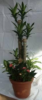 skyland gardening office plants rental