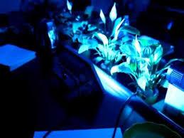 Intellibrite Landscape Lights Landscape Lighting Color Changing Lighting Flood Light