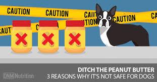 dog peanut butter can dogs eat peanut butter 3 reasons peanut butter isn t safe