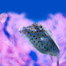 live web cams at the monterey bay aquarium