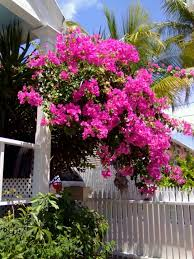 40 best hobbies fl plants u0026 trees images on pinterest florida