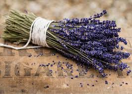 pruning lavender promoting flowering and long life