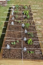 68 best vegetable gardening images on pinterest gardening