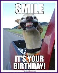 Funny Animal Birthday Memes - happy birthday memes with funny cats dogs and cute animals dog