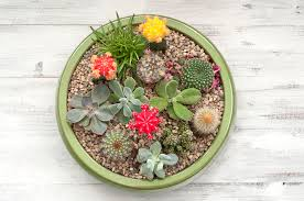 Succulent And Cacti Pictures Gallery Garden Design Making A Succulent Plant Container Garden