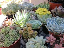 tips for planting the succulent planters in the containers
