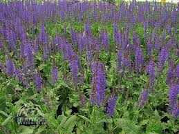 10 Best Perennials And Flowers by 218 Best Gardens Images On Pinterest Perennials Plant And Dwarf