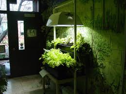indoor mini gardening simple lighting setup comes with makeovers