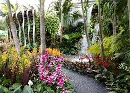 chelsea flower show 2015 u2013 the hidden beauty of kranji u2013 the