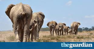kenya s new front in poaching battle the future is in the