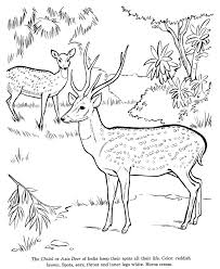 animal drawings coloring pages chital animal identification 6361