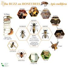 interesting honey bee chart the picture labeled