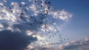 cloudy world wallpapers photo collection sky bird hd wallpaper