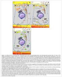 hereditary nephrogenic diabetes insipidus molecular basis of the