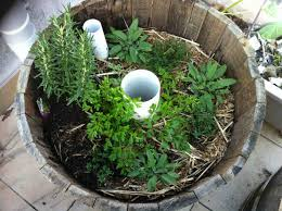 timbah rooftop herb garden part 4 how to make a wicking wine