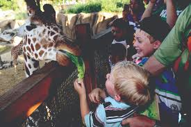 embark on your very own safari at the dallas zoo