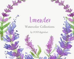 lavender flowers lavender flower clip etsy