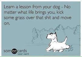 Funny Ecard Memes - learn a lesson from your dog funny pet humor cute dog ecard