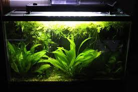 Aquarium Led Lighting Fixtures Modular Led Lighting For Freshwater And Marine Aquariums Petcha