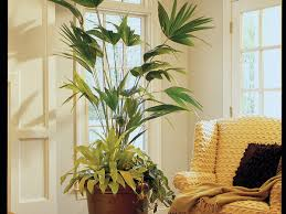 fill in the blank with houseplants southern living
