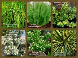 central texas native plants add some specimen plants to your garden texas gardening plants