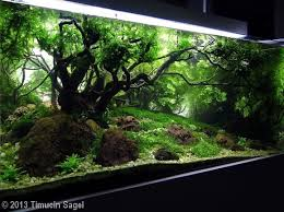 Aga Aquascape 141 Best Aquascaping Images On Pinterest Aquascaping Aquarium