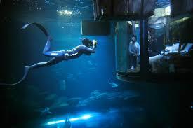airbnb aquarium guests sleep in 360 degree underwater bedroom