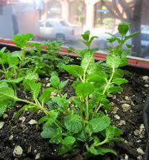five tips for indoor gardening this winter