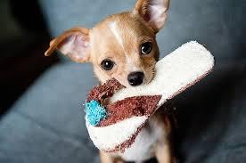 si e psa część vii pole bitwy czyli jak przygotować się na psa w domu