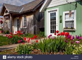small cottages with tulip garden display in shipshewana indiana