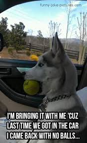 Dog At Vet Meme - come on you got balls or wha oh sorry by marstonfan94 meme
