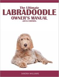labradoodle vs goldendoodle comparison what u0027s the difference