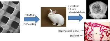ceramic nature rabbit table l effect of calcium phosphate coating and rhbmp 2 on bone regeneration