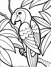 parrot coloring pages free printable coloring pages