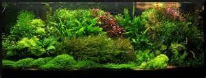 Aquascape Sfa3000 Charming Aquascape Fish Tank 5 Maxresdefault Jpg Animax Us