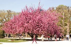 the most beautiful tree in in the city lobster