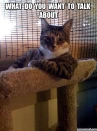 Talking Cat Meme - cat