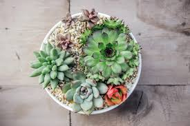 creative indoor planter ideas for your apartment rent com blog